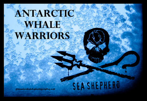 Click for Antarctic Whale Warriors